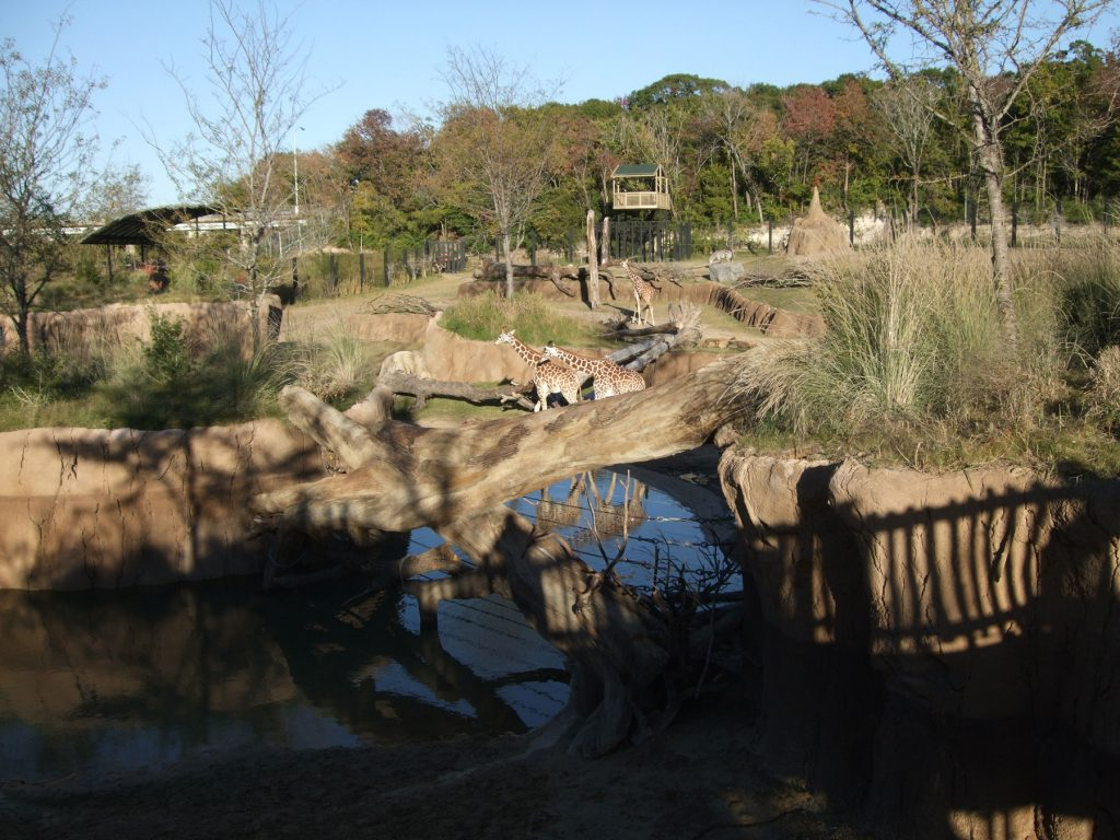 2011 - The Dallas Zoo's Giants of the Savanna exhibit ...